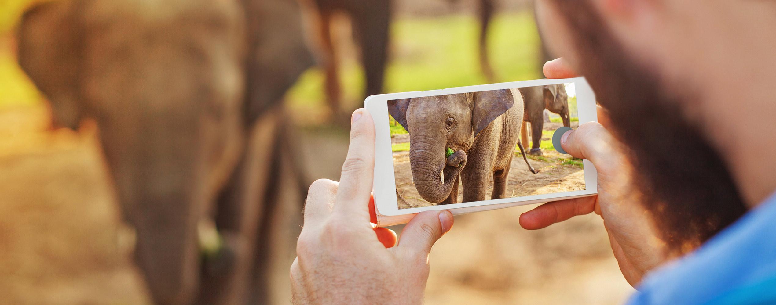 Elefant Smartphone (shutterstock)