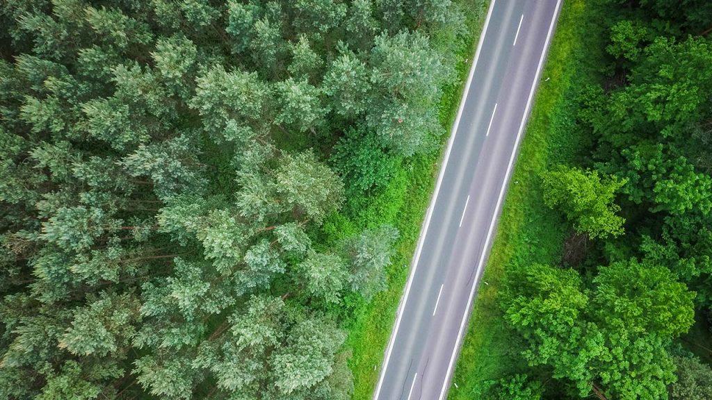picjumbo Straße Wald